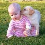 Children safe with labradors