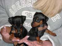 2_pups