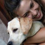 labrador rescue, labradors rescue, rescue a labrador