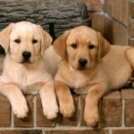 Who could resist these loveable puppies