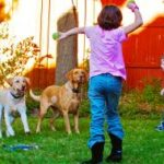 Families and Labradors