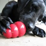 The Temperament of the Labrador Retriever