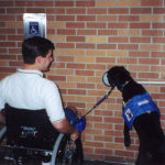 Training Labrador Retrievers as Guide Dogs