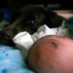 Labrador retrievers and babies can get along.