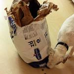 The Labrador Retriever and Allergies