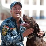 Bomb sniffing Labrador retrievers help keep the public safe.
