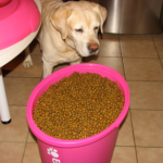 The right Labrador retriever food is essential to avoid allergies.